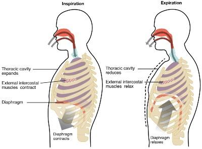 inhalation-exhaltion